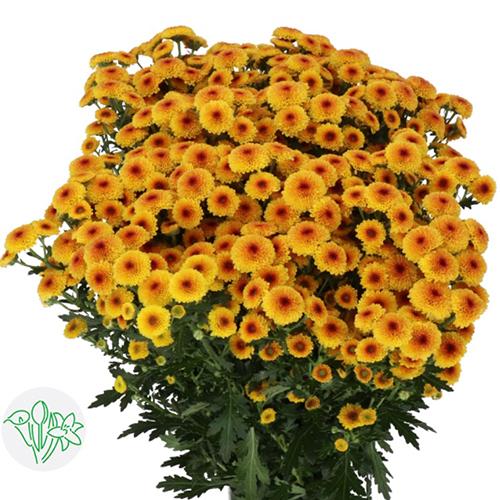 Chrysanthemum Yellow Ball