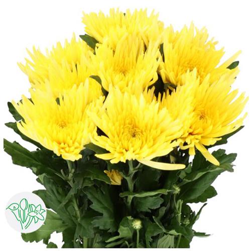 Disbud Flower