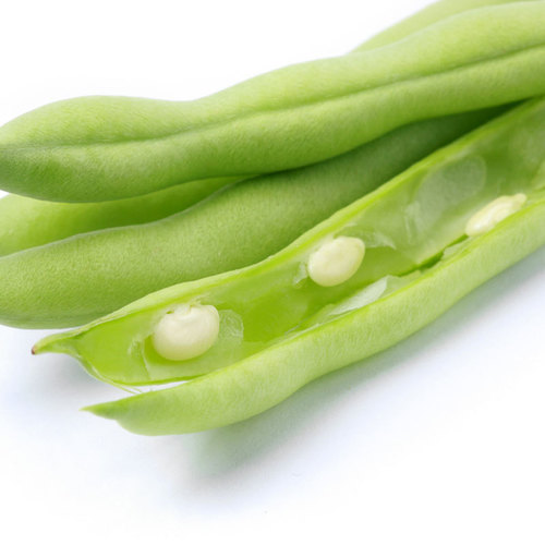 Flower Best French Bean Seeds Green beans Available