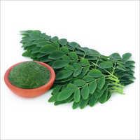 Moringa Leaf Extract