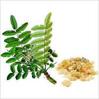 Boswellia Serrata Extract