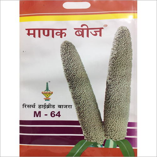 M64 Hybrid Bajra Seeds