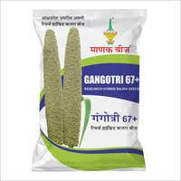 Gangotri 67 Research Hybrid Bajra Seeds