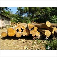Kerala Teak Wood Logs