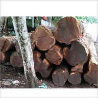 Lowest Kerala Teak Wood Log