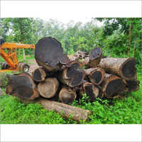 Kerala Forest Rosewood