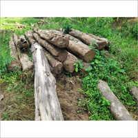 Nilambur Forest Teak Wood Logs