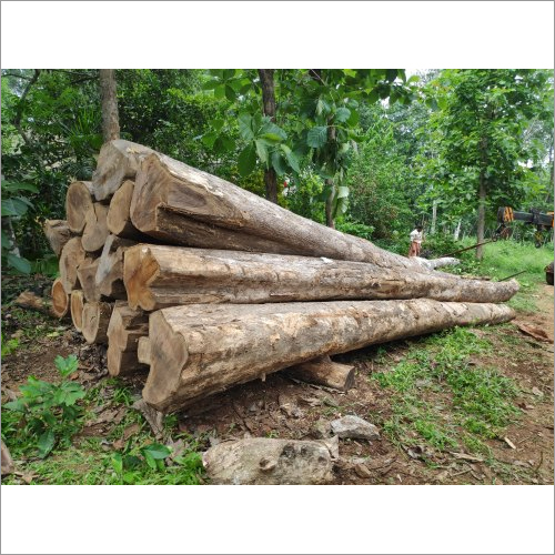 Kerala Forest Teak Wood