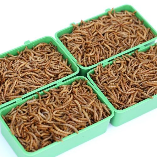 Worm for pet food