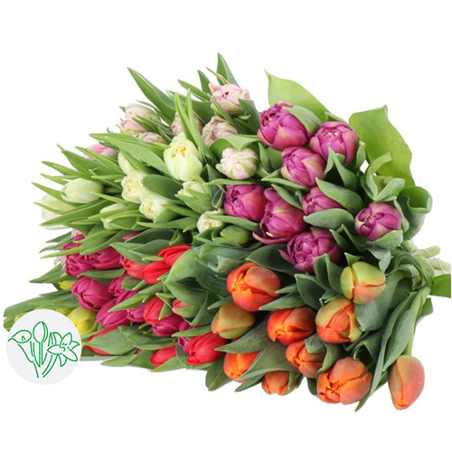 Tulips Assorted