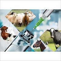 Veterinary Injections Third Party Manufacturing