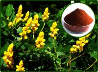 Cassia Angustifolia Extract
