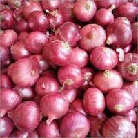 Fresh Organic Onion