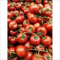 Fresh Organic Tomato
