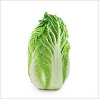 Fresh Organic Chinese Cabbage