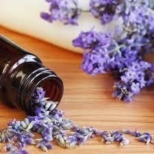 Lavender 40/42 Natural Blend Oil