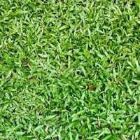 Blade Grass