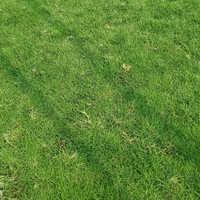 Selection Grass