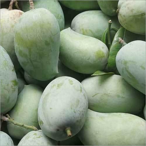 Green Ratnagiri Hapus Mango