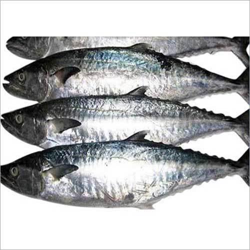 Fresh Surmai Fish