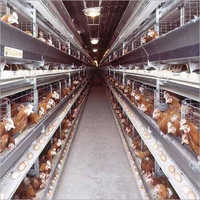 Battery Cages For Breeders