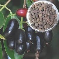 Eugenia Jambolana Seed