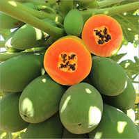 Organic Papaya