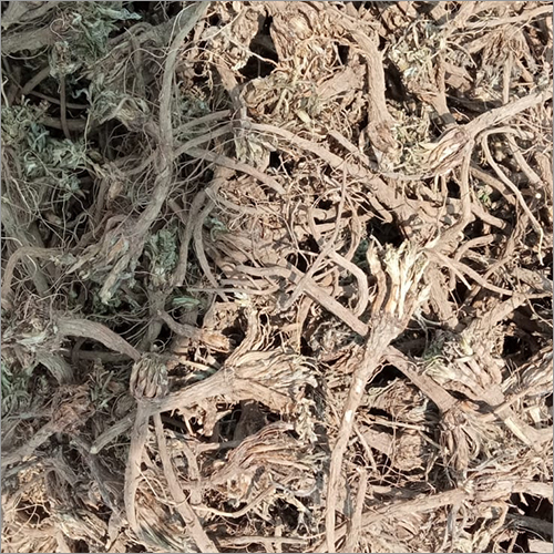 Anacyclus Pyrethrum and Pellitory Root