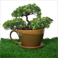 Ceramic Cup Saucer Bonsai Planter Pot