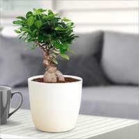 White Ceramic Bonsai Planter Pot