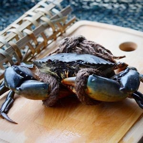 Black Live Mud Crabs