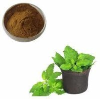 Ocimum sanctum herb Extract