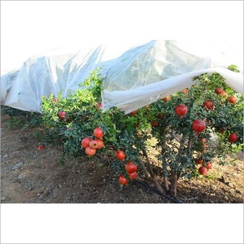 Non Woven Pomegranate Tree Cover