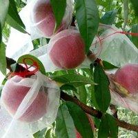 Non Woven Fruit Cover