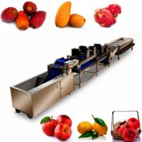 Automatic Lemon Sorting Machine Round Fruits Washing Waxing Drying Sorting Processing Line