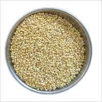 Healthy Organic Proso Millet
