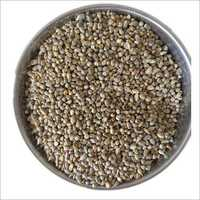 Clear Organic Pearl Millet