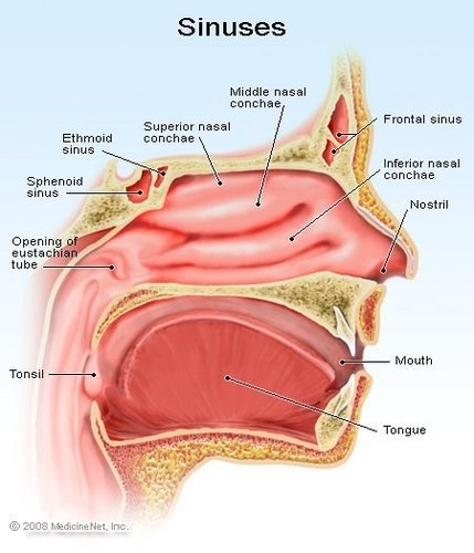 Sinus MODEL