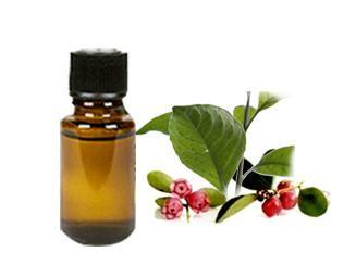 GULTHERIA OIL