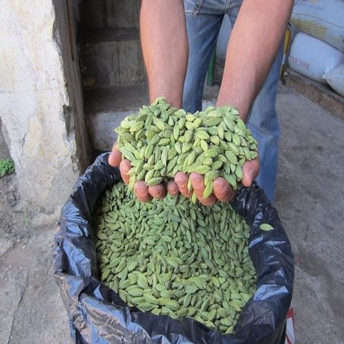 Best Quality Organic Cardamom Seeds.