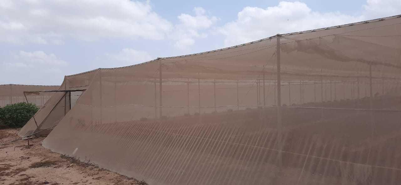 Second hand shade net house