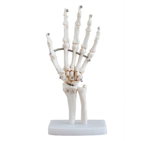 ConXport Life-Size Hand Joint