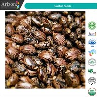 Castor Seeds / Ricinus communis