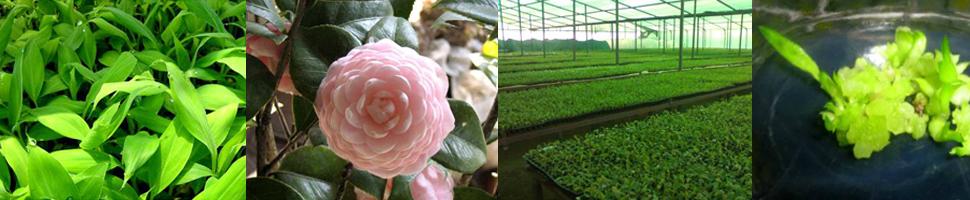 Sristi Agro biotech Private Limited  Banner