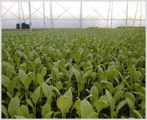 Shree Balaji Agro Plast