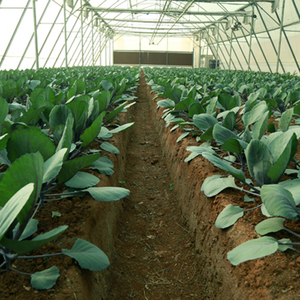 Greenhouse And Agri Infra