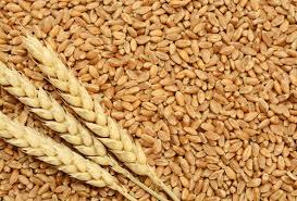 Tukdi Wheat