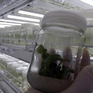 Plant Bio Technology
